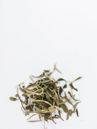 Wide and dark green tea leaves mixed with white tea needles spill over the silver spoon edge onto the white background