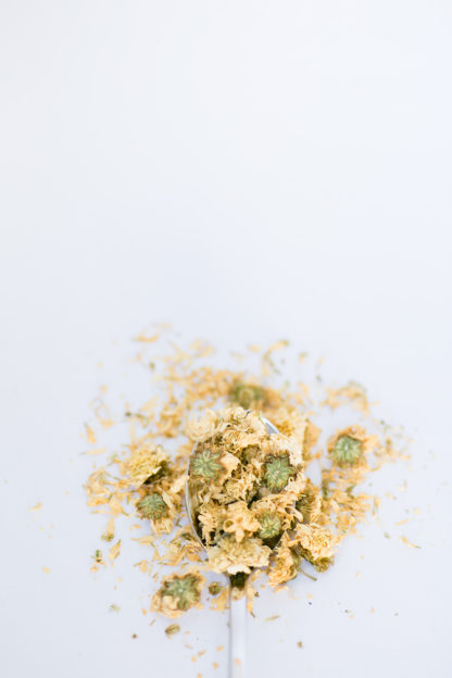 Fluffy dry chrysanthemum flower petals with bright green centers overflow the silver spoon onto the white background